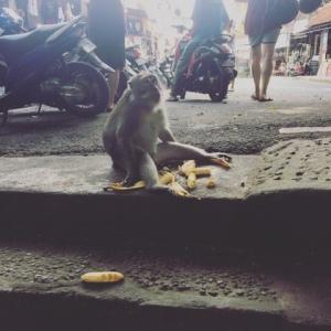 monkey-with-bananas